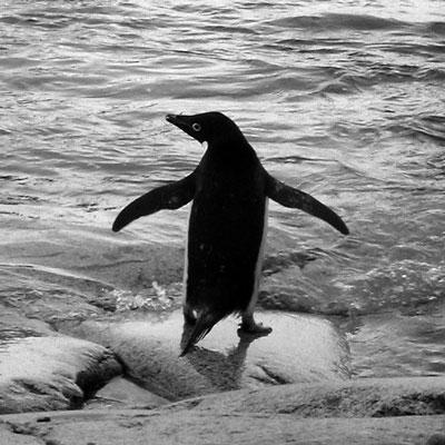 penguin_bw